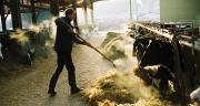 Pour les éleveurs bovins laitiers, le redressement des résultats 2017 est porté par la hausse du prix du lait.