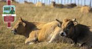 Le Groupe Unicor lance sa propre marque de viande : « L'Engagement paysan » CP AdobeStock/Thierry RYO