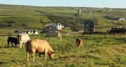 Le programme national irlandais, the Irish Beef Data and Genomics Program, vise à réduire l'intensité des émissions de GES en améliorant la qualité et l'efficacité du troupeau allaitant national.