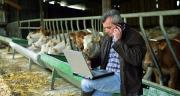 JB-Box permet de simuler les performances de croissance des jeunes bovins selon le régime d'engraissement. Crédit photo :  auremar - Fotolia