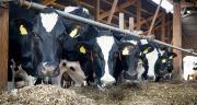 Le sélénium est intégré par les fabricants d'aliments pour lutter contre le stress oxydatif et aider les animaux à mieux lutter contre les maladies. Photo: countrypixel/Fotolia