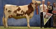 Géorgie, grande championne du concours national 2013 de la race montbéliarde. Photo: M.Ballan/Pixel image