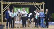 Hautmont Hill Radi (Rawhide), grande championne du concours prim'holstein au Show Open Génisses 2019, et sa réserve, JK Eder Solomon Daryl (Solomon), toutes deux appartenant à l'élevage Hautmont Hill Holstein (Belgique). Photos : H.Flamant/Terroir Est.
