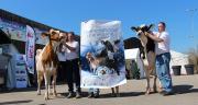 Organisée par Prim'Holstein France, l'association Eurogénétique et le Club Holstein 68, la Confrontation européenne se déroulera à Colmar, du 17 au 19 juin 2016. Photo : Prim'Holstein France.