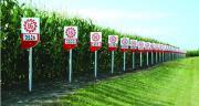 Limagrain représente 32% de part de marché en maïs fourrage en France. Photo : Limagrain