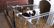 Le distributeur automatique de lait LifeStart, mis au point par la firme allemande Urban, permet d'automatiser l'alimentation des veaux dans la phase de logement individuel. Photo : Urban GmbH&Co.KG