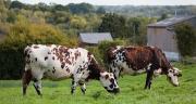 Les ventes de produits laitiers restent supérieures à la normale. ©L.Page/Cniel