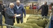 Quatre concours spéciaux (mouton charollais, île de France, texel, suffolk), un challenge génétique, deux ventes aux enchères (suffolk, hampshire) et différentes animations attendent les visiteurs sur le pôle ovin.