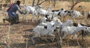 Le pastoralisme en Afrique de l'Ouest valorise différentes zones agroécologiques plus ou moins fertiles. Photo Antoine Hervé/Pixel image