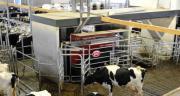 En moyenne, les vaches ont produit 8446 kg de lait par an en 2019. CP : DR