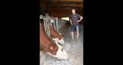 Les producteurs laitiers espèrent un développement de l'ordre de 30% de la collecte de lait bio d'ici 2018. Photo : M.gagneux/pixel image