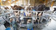 Chaque agriculteur membre d'un Gaec bénificiera des aides de la Pac au même titre qu'un agriculteur individuel. Photo : C. Helsy Cniel.