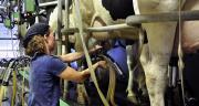 """Pour être reconnue comme OP pour la catégorie """"lait de vache"""", l'organisation de producteurs justifie soit d'un nombre minimum de 200 membres producteurs, soit d'un volume minimum de 60 millions de litres de lait commercialisés."""