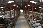 Le bâtiment peut acceuillir 288 jeunes bovins