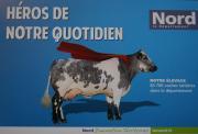 Le département du Nord compte 83700 vaches laitières, héroïnes de notre quotidien.