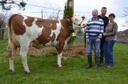 Allez à la rencontre de l'élevage Negron et de Griotte dans Cultivar App'Bovins n°14. Ils vous ouvrent les portes de leur ferme située à 1000 mètres d'altitude, sur la commune de Bains en Haute-Loire. Photo: M.Ballan/Pixel image
