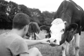 Pour Cyprien Petit, éleveur à Ferrières-Lès-Scey (70), les vaches sont une vraie passion. Photo : DR