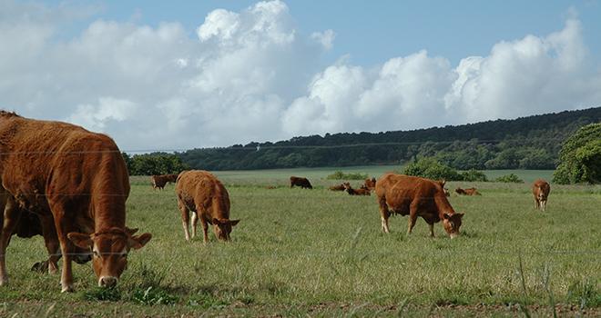 Les étudiants ont proposé d'implanter deux prairies temporaires afin de gagner en autonomie fourragère. © D.Bodiou/Pixel6TM