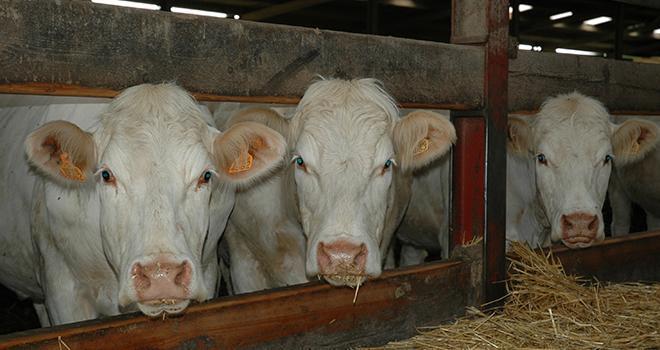 Les représentants de la section bovin d'Interbev ont validé la méthode de calcul d'un indicateur de prix de revient en viande bovine.