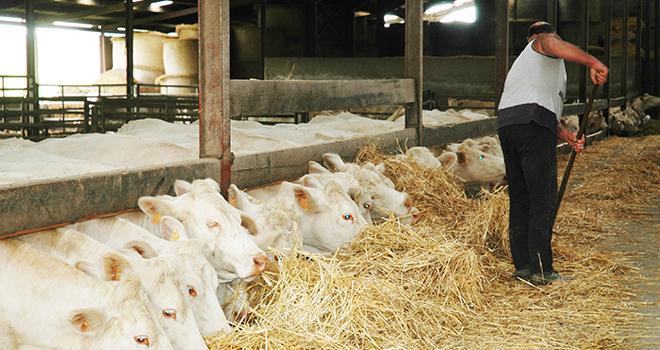 Côté élevage, la production de gros bovins a diminué en valeur de 1,1 %, à la suite d'une baisse des volumes (- 1,2 %) dans un contexte de stabilité des prix (+ 0,2 %). ©H. Grare/Pixel6TM