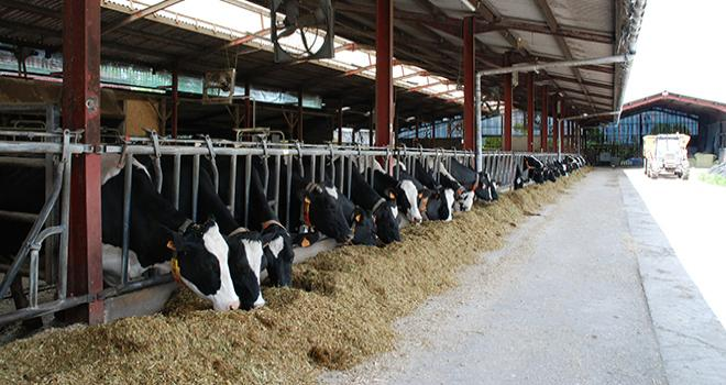 Parmi les 3600 adhérents du Clasel en Mayenne et Sarthe, il y a actuellement 100 troupeaux de plus de 100 vaches laitières. Photo : DR.