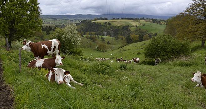La fin des quotas pourrait conduire à un abandon de la production laitière dans certaines zones difficiles. Photo M. Ballan/Pixel Image