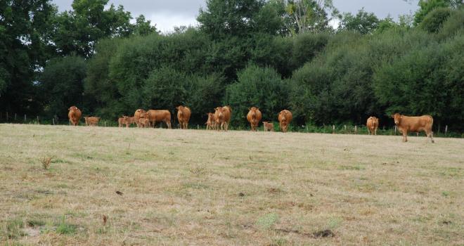 La majorité des régions françaises sont en déficit de production d'herbe cumulée par rapport à la période de référence. CP : Pixel6TM