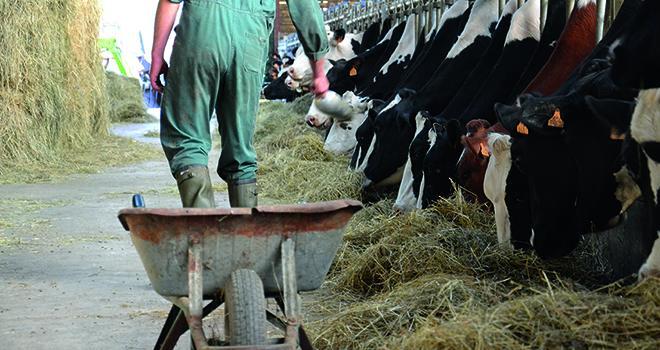 Le projet Orgue pour faciliter l'agrandissement et la transmission des exploitations laitières.