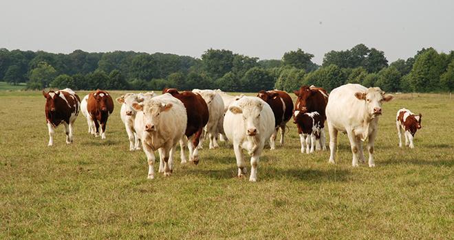 L'offre milieu de gamme en viande bovine va passer de 3 % à 40 % dans les années à venir.
