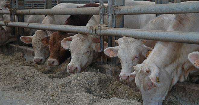 L'Europe est présente sur le marché de la viande bovine sur le pourtour méditerranéen, en concurrence avec l'Uruguay et le Brésil. Photo : H.Grare/Pixel Image