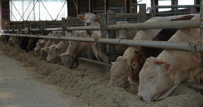 L'allègement des carcasses est sans incidence sur la qualité des carcasses et des viandes. Photo : H.Grare/Pixel Image