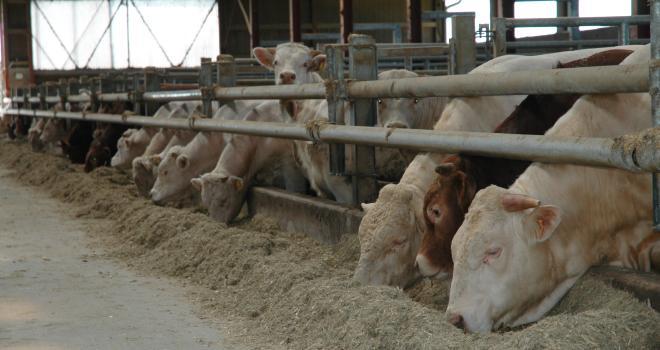 Un mois après le début du confinement, le Covid-19 chamboule toujours le marché de la viande. CP : H.Grare/TerroirEst