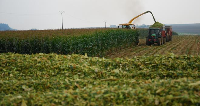 La solution Maïs Secure apporte une garantie financière aux producteurs connaissant une baisse de rendement importante en maïs grain et en fourrage sur leur département. CP : M. Lecourtier/Pixel6TM