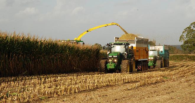 Les premières récoltes de maïs commenceraient vers le 20 août. ©N. Tiers/Pixel6TM