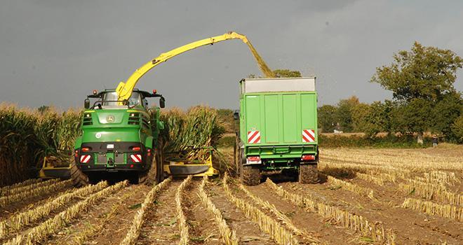 Dans certains pays, l'ensilage de maïs brins longs prend de l'ampleur. Photo : N.Tiers/Pixel image