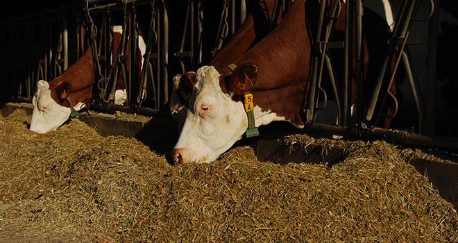 Réduire l'empreinte carbone des aliments avec Feeds EA. ©M.Lecourtier/Média et Agriculture