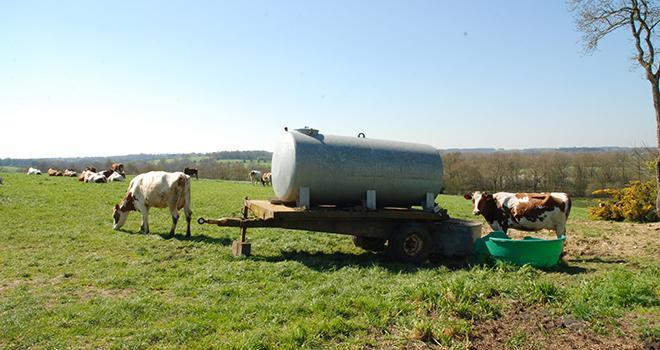 Avec des températures supérieures à 25 °C le besoin en eau des vaches est multiplié par deux. © N.Tiers/Pixel6TM