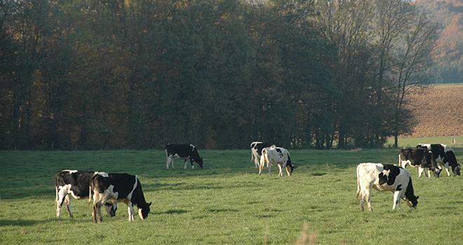 Le secteur laitier s'engage à réduire de 20% ses émissions de gaz à effet de serre par litre de lait d'ici 2025.