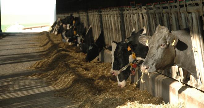 Eilyps abordera de nombreux thèmes autour de la performance agricole dans des webinaires diffusés du 1er au 4 septembre 2020. CP : H.Flamant/Terroir Est.