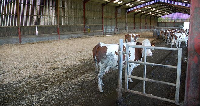 Tout élément métallique d'un élevage peut être conducteur d'un courant électrique parasite. Aussi bien les barrières que les abreuvoirs. Photo : DR