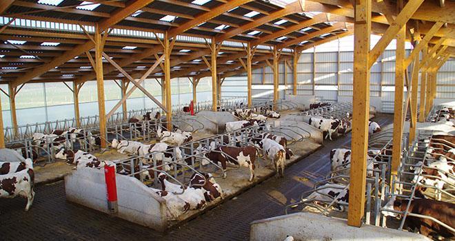 Le bien-être animal sera au cœur des expérimentations du laboratoire. Photo : Guihard/Pixel Image