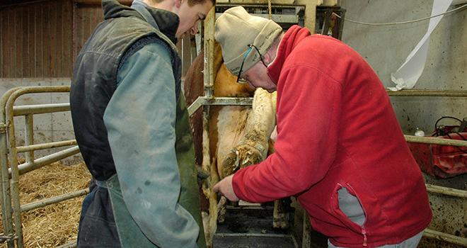 """""""Quand une vache boite, plus elle est soignée tôt, plus on a de chance qu'elle évite le stade de dermatite profonde"""", insiste le Dr Jean-Michel Bonnefoy. Photo : DR"""