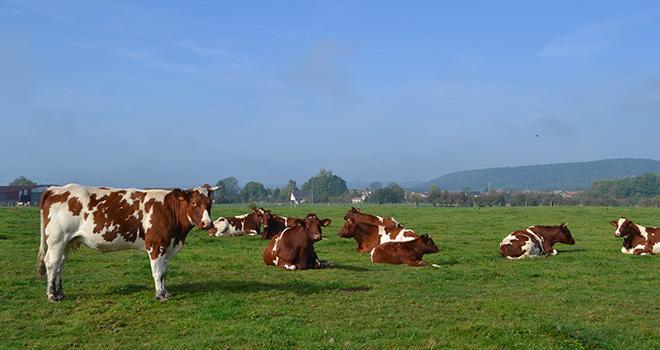 L'Anses a estimé nécessaire de réaliser une réflexion approfondie sur le bien-être animal.