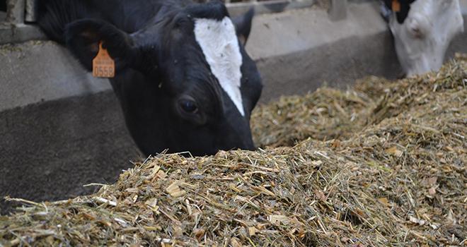 Le traitement thermique sur les graines de féveroles apporte peu au lait. ©C.Lamy-Grandidier/Pixel6TM