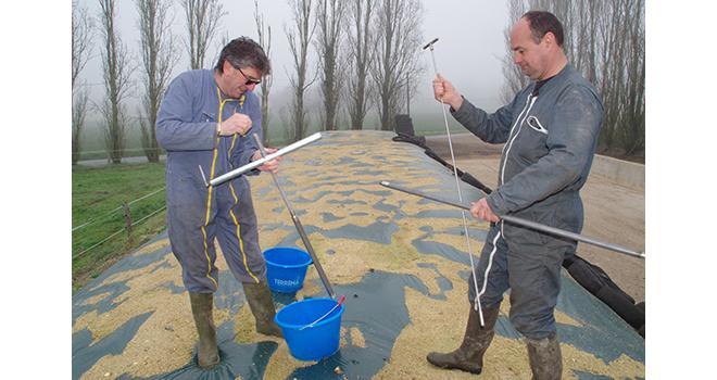 Paul Nerriere de Terrena, à gauche prélève un échantillon pour l'analyse de maïs fourrage avec l'éleveur Franck Cherré. ©M.D. Guihard/Pixel6TM