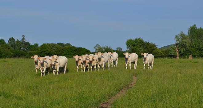 Aujourd'hui, la France est en négociation pour une ouverture du marché chinois afin de pouvoir exporter de a viande bovine.