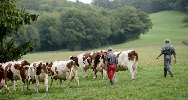 L'Idele propose cinq leviers pour aider les éleveurs à moduler leur production de lait. CP : P.Dureuil/Cniel.