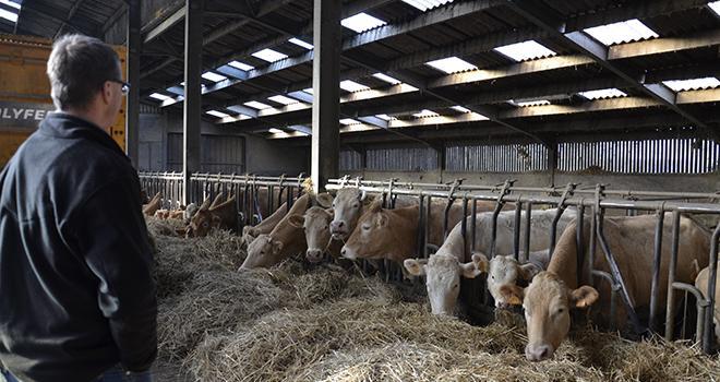Chez les bovins viande, le prix entrée abattoir est en baisse depuis 2014. Photo : A.Cotens/Pixel image