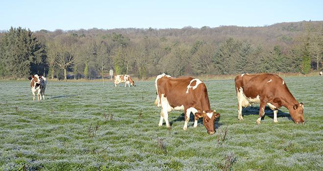 Chacun des 1 400 éleveurs recevra en moyenne 5 700 euros d'aide. Photo : A.Cotens/Pixel image