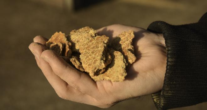 Les entreprises françaises de la nutrition animale s'engagent à importer du soja plus durable. CP : Happyculteur/Adobe Stock